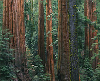 Tranquil scenes of trees and the American woods